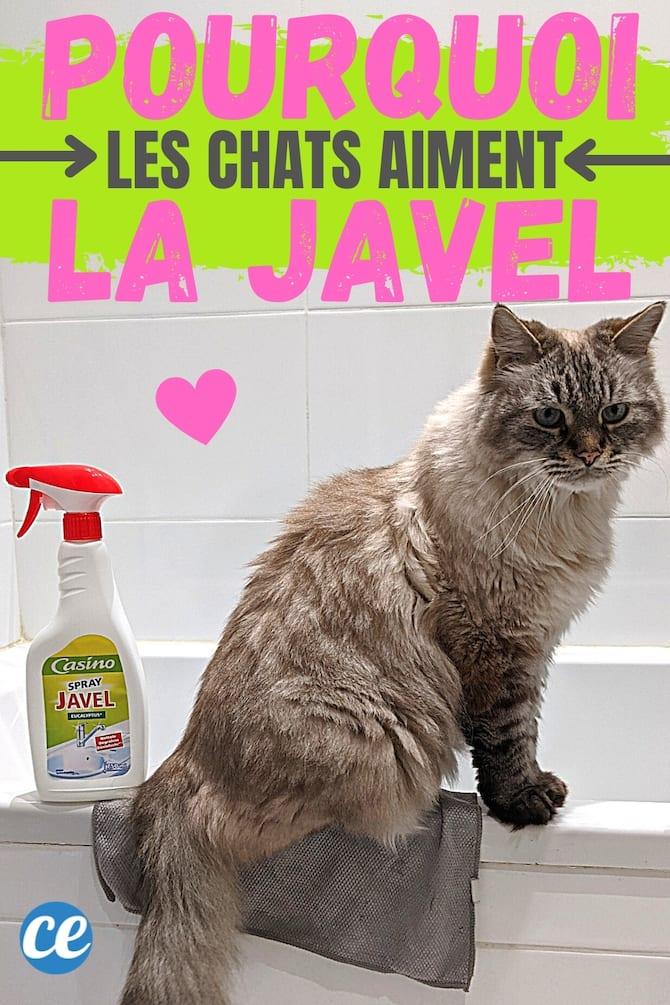 chat gris qui tourne le dos à une bouteille de javel