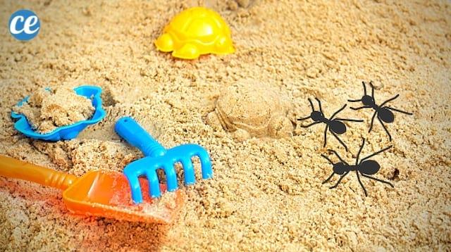 Des fourmis qui se baladent dans le bac à sable d'un enfant et comment les éliminer