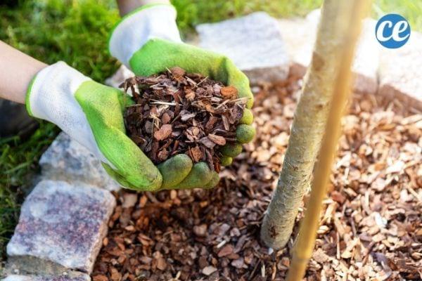Le paillage possède de nombreux avantages pour votre jardin.