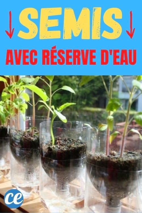 bouteille plastique transformée en pot à semis