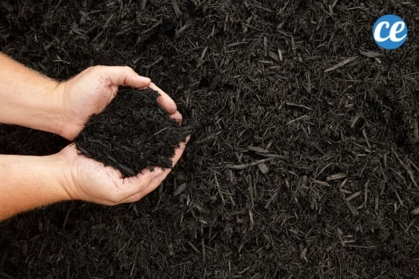 Le compost est idéal à utiliser comme paillis pour protéger vos plantes des mauvaises herbes.