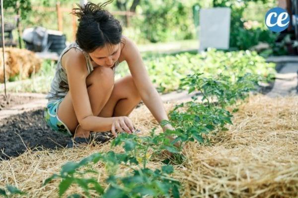 Une femme qui utilise de la paille pour protéger les plantes et le sol de son jardin.