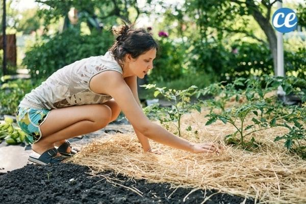 Une femme qui met du paillage sur le sol de son jardin.