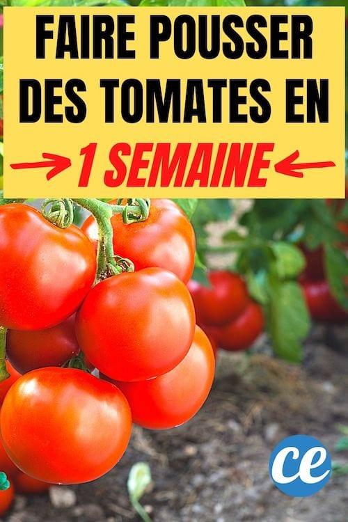 L'astuce pour faire pousser des tomates en 1 semaine