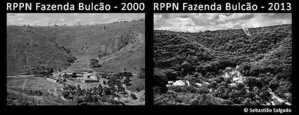 La forêt amazonienne détruite en 2000 puis replantée en 2013