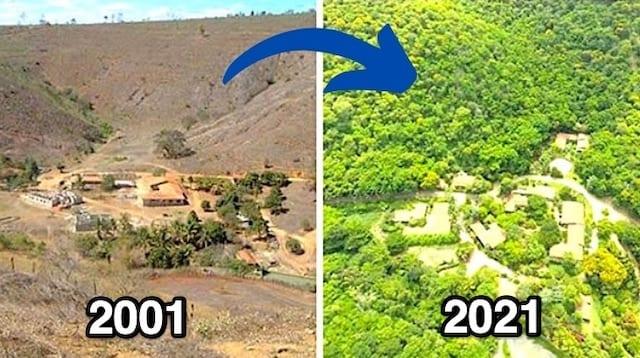 Le terrain de sebastioa salgado sans arbres en 2001 puis avec des arbres en 2019