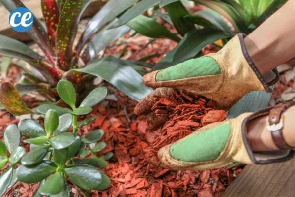 Le paillage aide à protéger vos plantes, nourrir le sol et empêcher les mauvaises herbes.