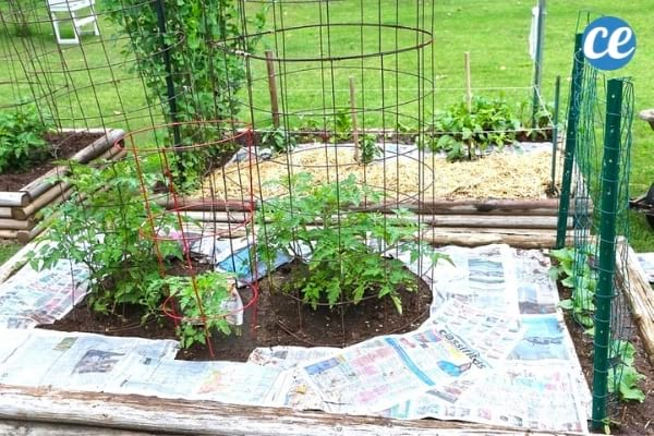 La papier journal est une bonne solution économique pour empêcher les mauvaises herbes de pousser dans votre jardin.