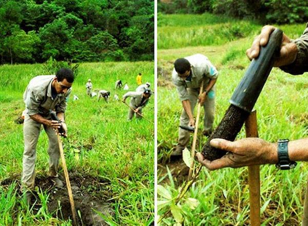 des hommes creusent la terre pour replanter des pousses d'arbres