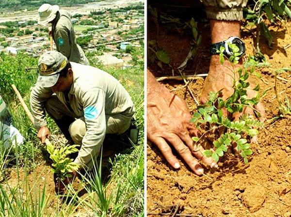 un homme plante une pousse d'arbre