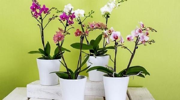 Plusieurs pots de fleurs posés