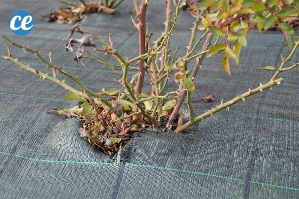 La toile de paillage protège les plantes de votre jardin.