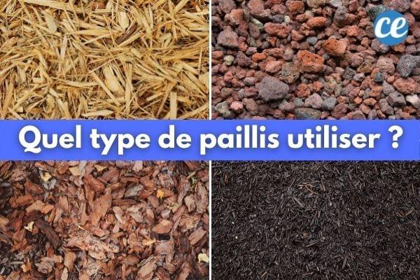 Paille, pouzzolane, compost, copeaux de bois : les meilleurs paillis pour votre jardin.