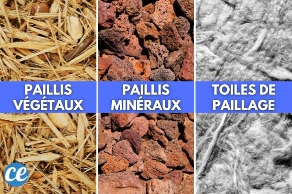 Les 3 types de paillis : végétaux, minéraux et toiles de paillage.