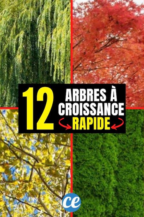 12 arbres qui poussent vite pour cacher le vis-à-vis et faire de l'ombre
