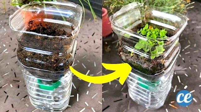 Une bouteille en plastique transformée en arrosage automatique pour semis