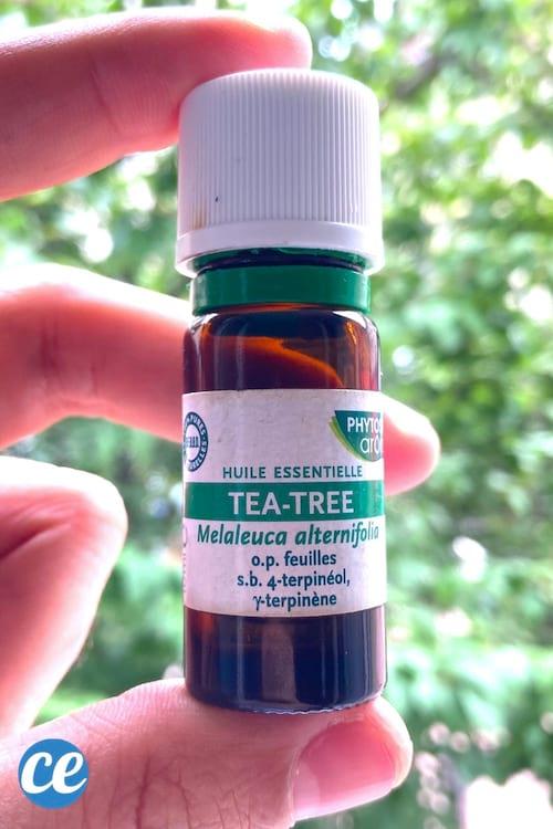 L'huile essentielle d'arbre à thé pour fabriquer un spray répulsif anti-moustique naturel.