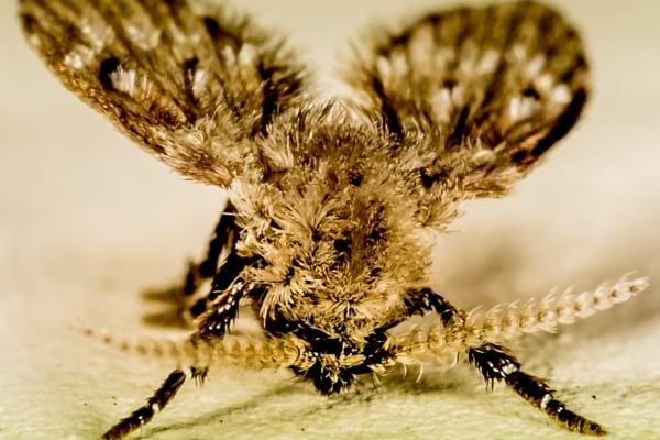 Une mouche à égout