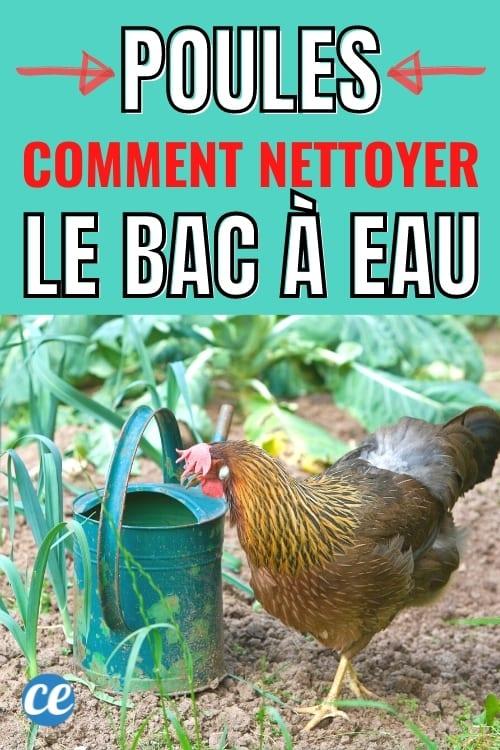 comment garder l'eau des poules bien propre