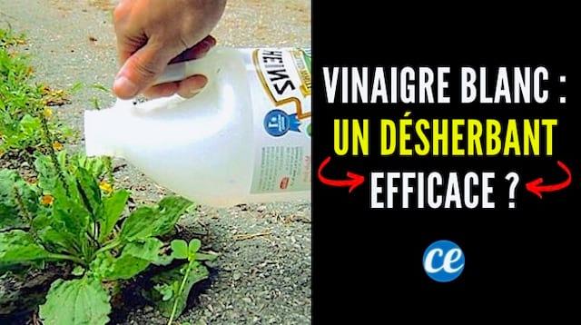 Le Vinaigre Blanc : Un Désherbant 100% Naturel et Efficace ?
