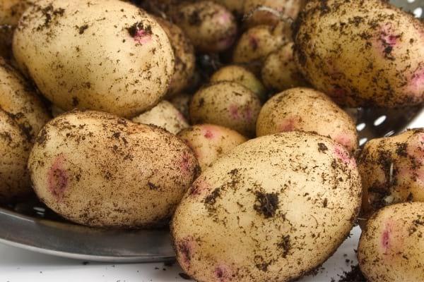 des pommes de terre grenaille