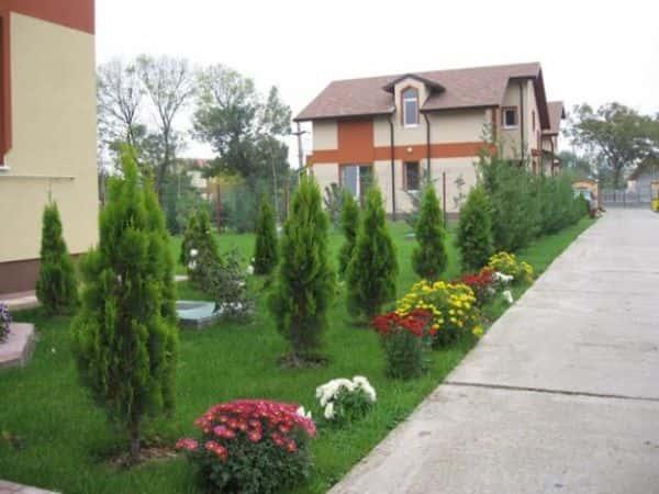 Décorez votre jardin avec des arbustes et des fleurs.