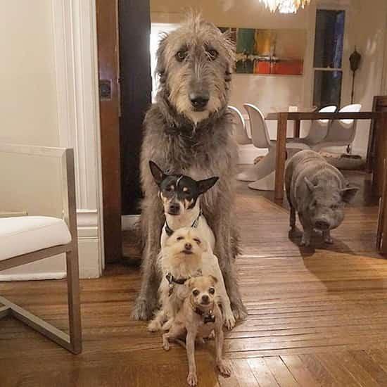 adoption d'animaux âgés