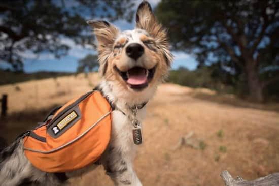Saviez-vous que la randonnée réduit le phénomène de rumination ?