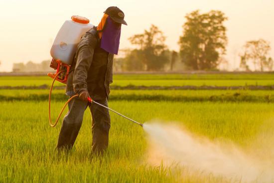 Monsanto fait des expériences sur les abeilles
