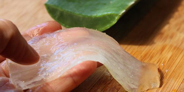 Voici ce à quoi ressemble le gel d'Aloe vera à l'état naturel.