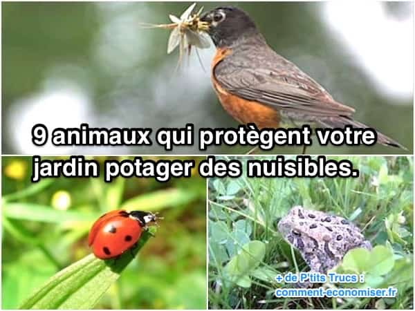 9 animaux pour protéger jardin potager anti nuisible