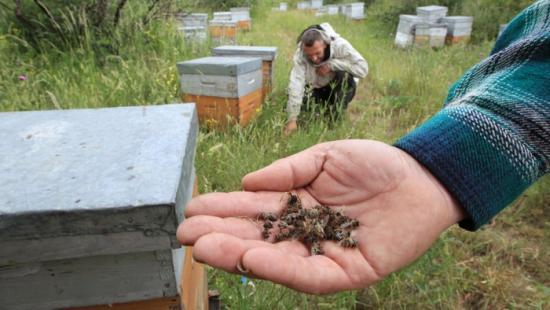 les apiculteurs sont inquiets
