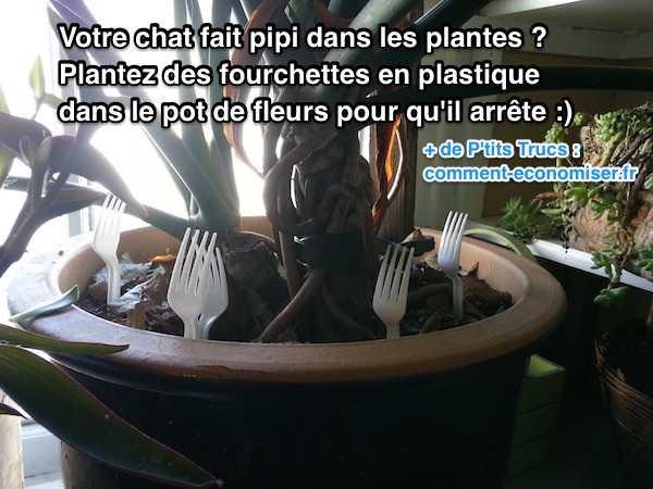 Votre chat fait pipi dans les plantes voici l 39 astuce - Plante qui fait dormir ...