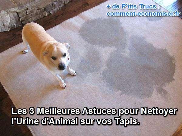 les 3 meilleures astuces pour nettoyer l urine d animal sur vos tapis
