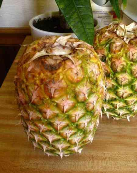 deux ananas sont rangés la tête en bas, sans leurs feuilles