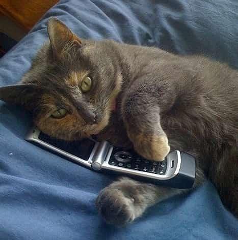 chat gratuit par telephone