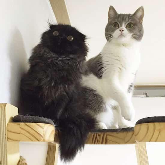 2 chats amis noir et gris