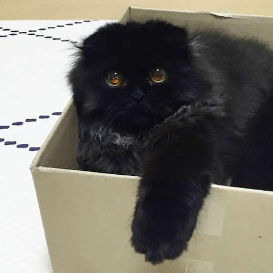 chat noir dans boite en carton
