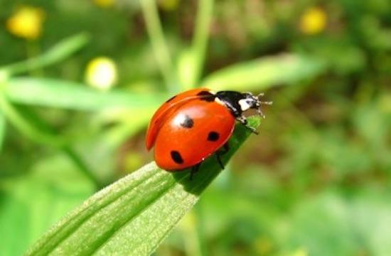 9 animaux qui prot gent votre jardin potager des nuisibles - Anti puceron naturel ...