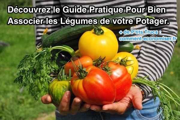 Guide pratique pour bien associer les légumes du potager