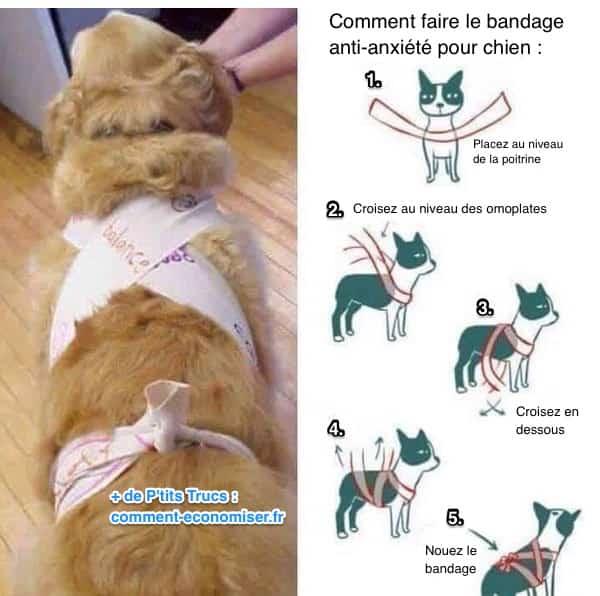 Cette astuce simple vous aidera garder votre chien calme pendant les feux d 39 artifice - Comment empecher un chat d uriner partout ...