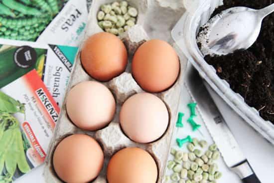 Utilisez les coquilles d 39 oeufs comme pots semis pour conomiser sur le jardinage - Coquille d oeuf dans le jardin ...