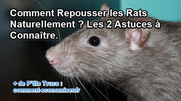 comment repousser les rats naturellement les 2 astuces. Black Bedroom Furniture Sets. Home Design Ideas