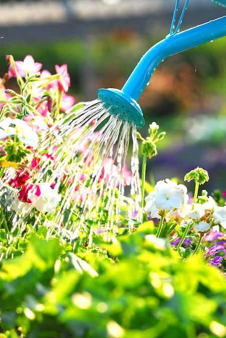 6 utilisations de l 39 eau oxyg n e dans le jardin que personne ne conna t. Black Bedroom Furniture Sets. Home Design Ideas