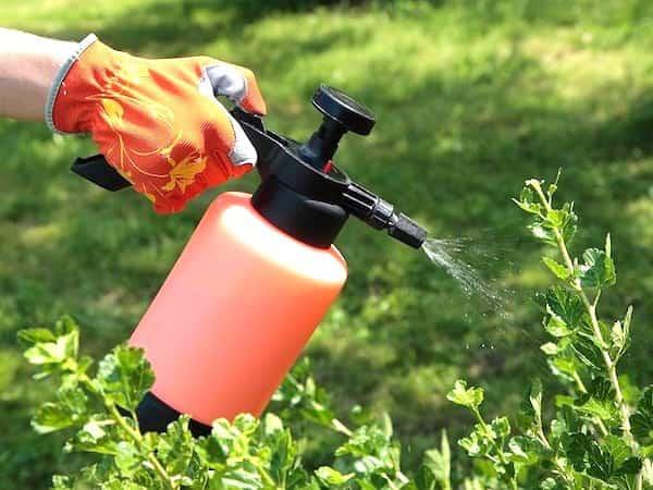 6 utilisations de l 39 eau oxyg n e dans le jardin que personne ne conna t - Lutter contre les moisissures ...