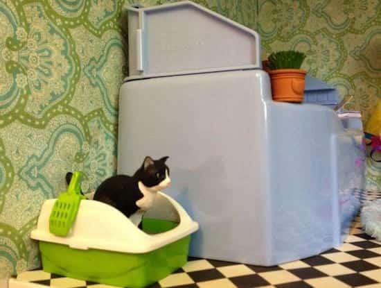 un chat est dans sa litière