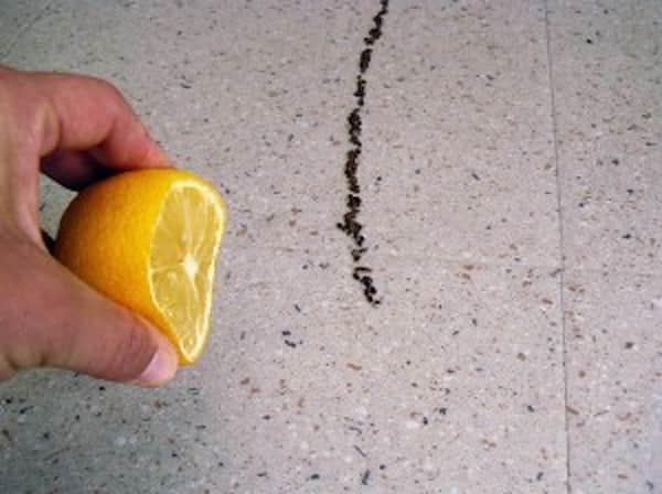 L 39 astuce toute simple pour emp cher les fourmis de rentrer dans votre maison - Comment eradiquer les fourmis ...