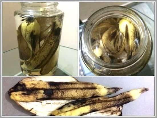 recette du vinaigre de banane