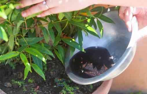 nourrissez vos plantes avec du thé