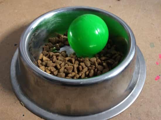 Gamelle pour empêcher chien de manger rapidement